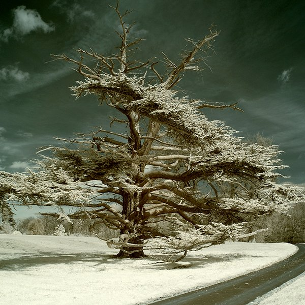 Beautiful and Mind Blowing Tree Pictures from Around the World