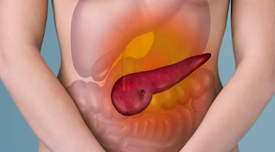facts about pancreas
