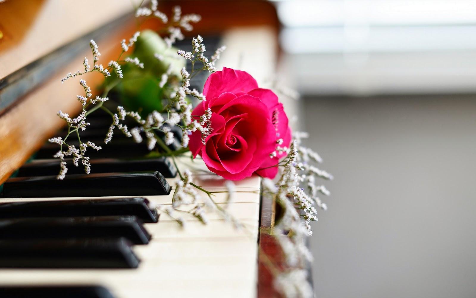 Foto van een piano met rode roos