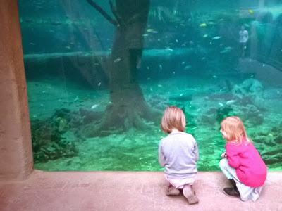 Ausflug mit Kindern in das Tropen Aquarium Hamburg