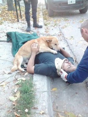 Exactly when His Human Was Harmed, This Committed Pup Never Walked out on him