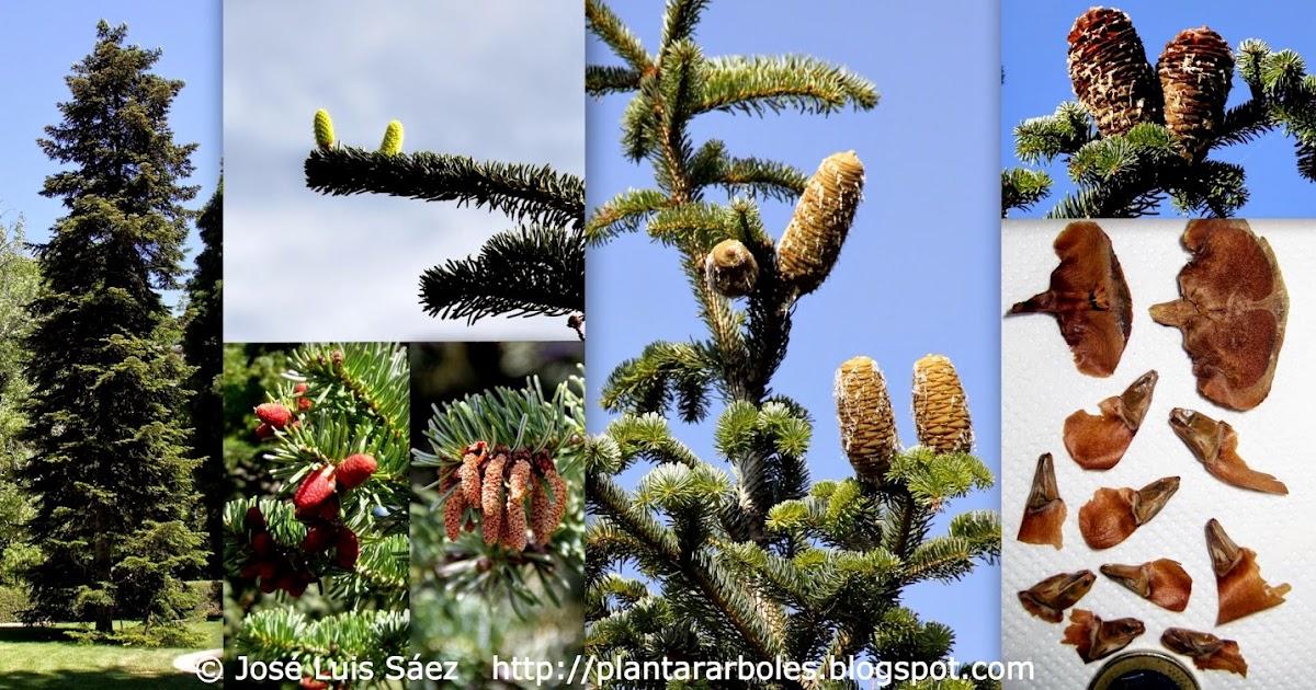 Plantar rboles y arbustos rboles no aut ctonos de - Arboles y arbustos ...