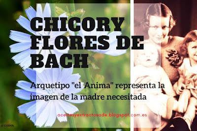 Chicory, Flores de Bach, Dependencia de los demás y Estado de Posesividad