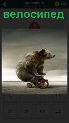 Большой медведь сидит на маленьком велосипеде и крутит лапами педали, набирая скорость