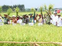 Optimalisasi Lahan Rawa untuk Produksi Pangan Berkelanjutan