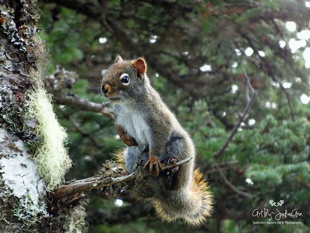 Wildlife Squirrel Photo