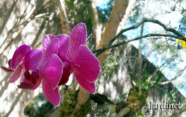 Corte da haste floral pós floração