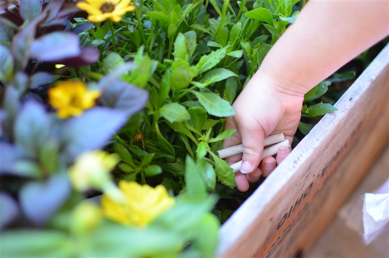 Planting Raised Bed Boxes DIY Gardening by Amy Renea of A Nest for All Seasons