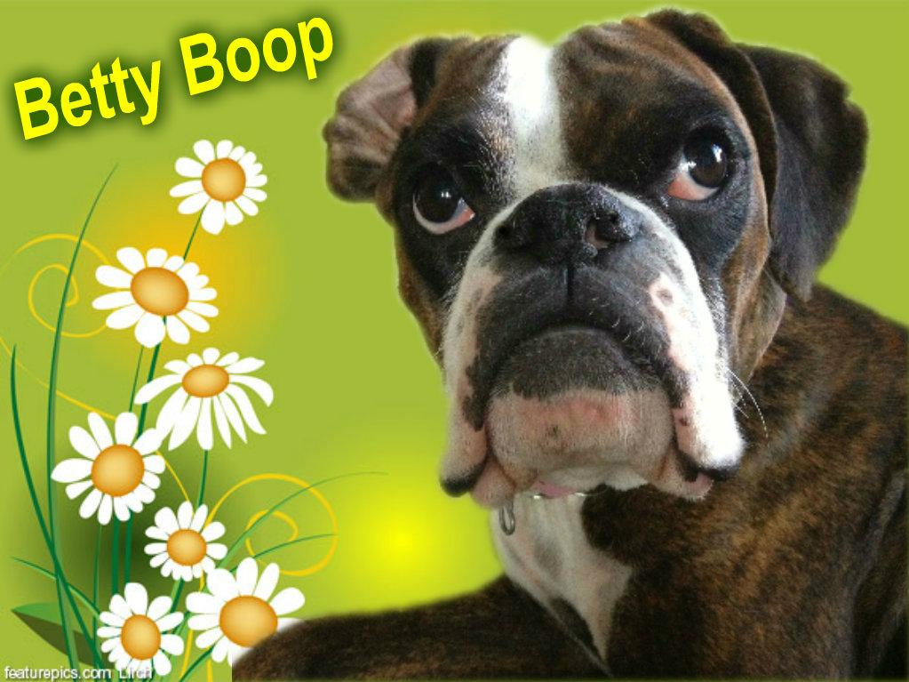 Boop Boop Be Doo