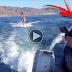 Wakeboarder Is Joined By A Family Of Dolphins