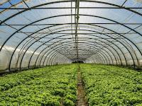 Green House Dengan Bahan Plastik UV Lebih Menguntungkan Dibandingkan Dengan Bahan Kaca