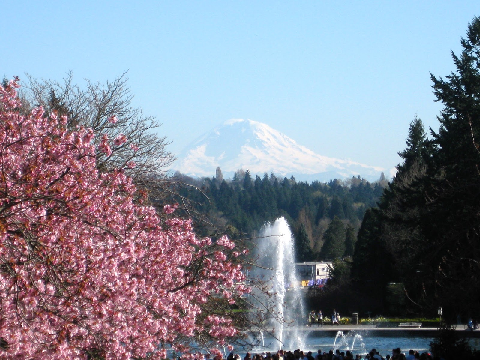 Seattle Japanese Garden Community Blog Sakura Hanami 2013