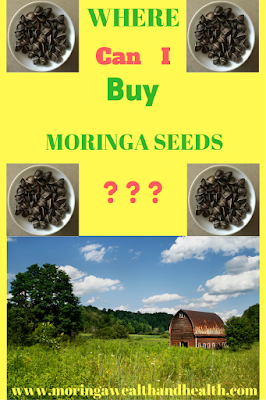 Where buy moringa seeds