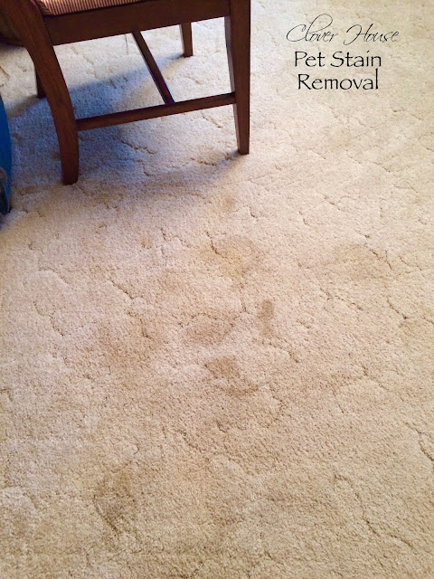 Clover House: Easy Way to Remove Pet Stains