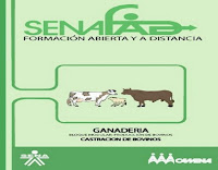 producción-de-bovinos-6-castración-de-bovinos