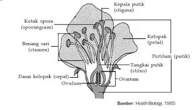Klasifikasi Kingdom Plantae dari Tumbuhan Biji Tertutup (Angiospermae) dan Contoh Tumbuhan Monokotil dan Dikotil