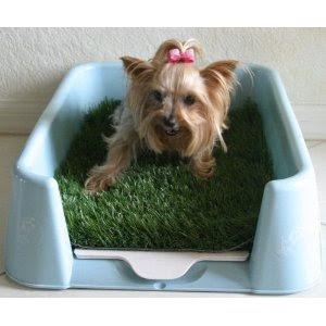 Small Dogs Litter Bo