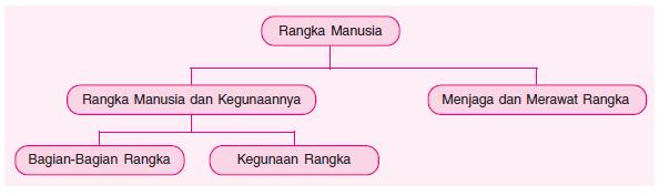 peta konsep rangka manusia