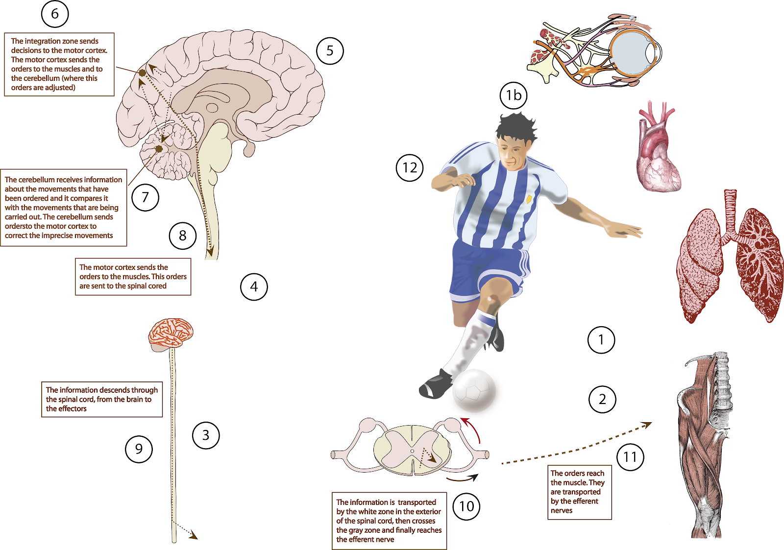 El Moderno Prometeo Nervous Function Three Seconds And A Goal
