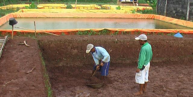 Pembuatan Kolam Tanah - Budidaya Ikan