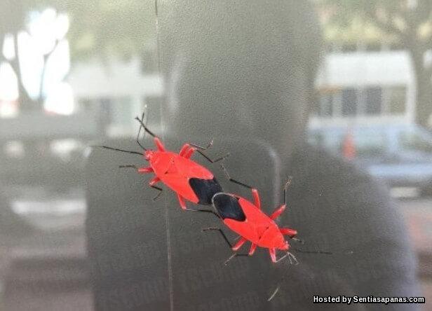 Red Bugs.jpg