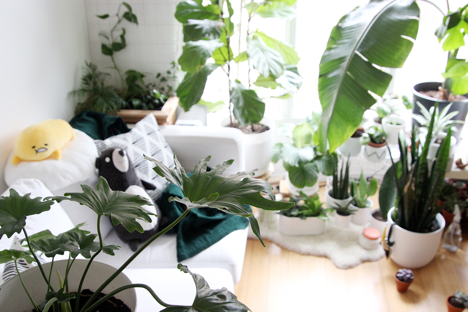 image of home office with indoor plants