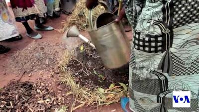 Warga Malawi Menggunakan Air Seni Manusia Sebagai Pupuk Tanaman