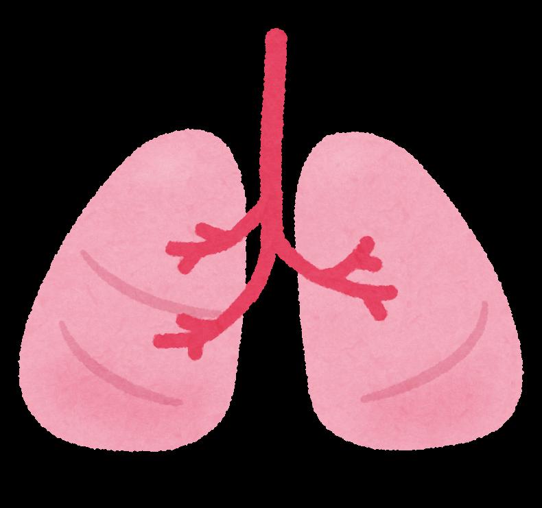 「肺 イラスト フリー」の画像検索結果