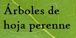 Plantas riomoros for Arboles de hoja perenne en madrid