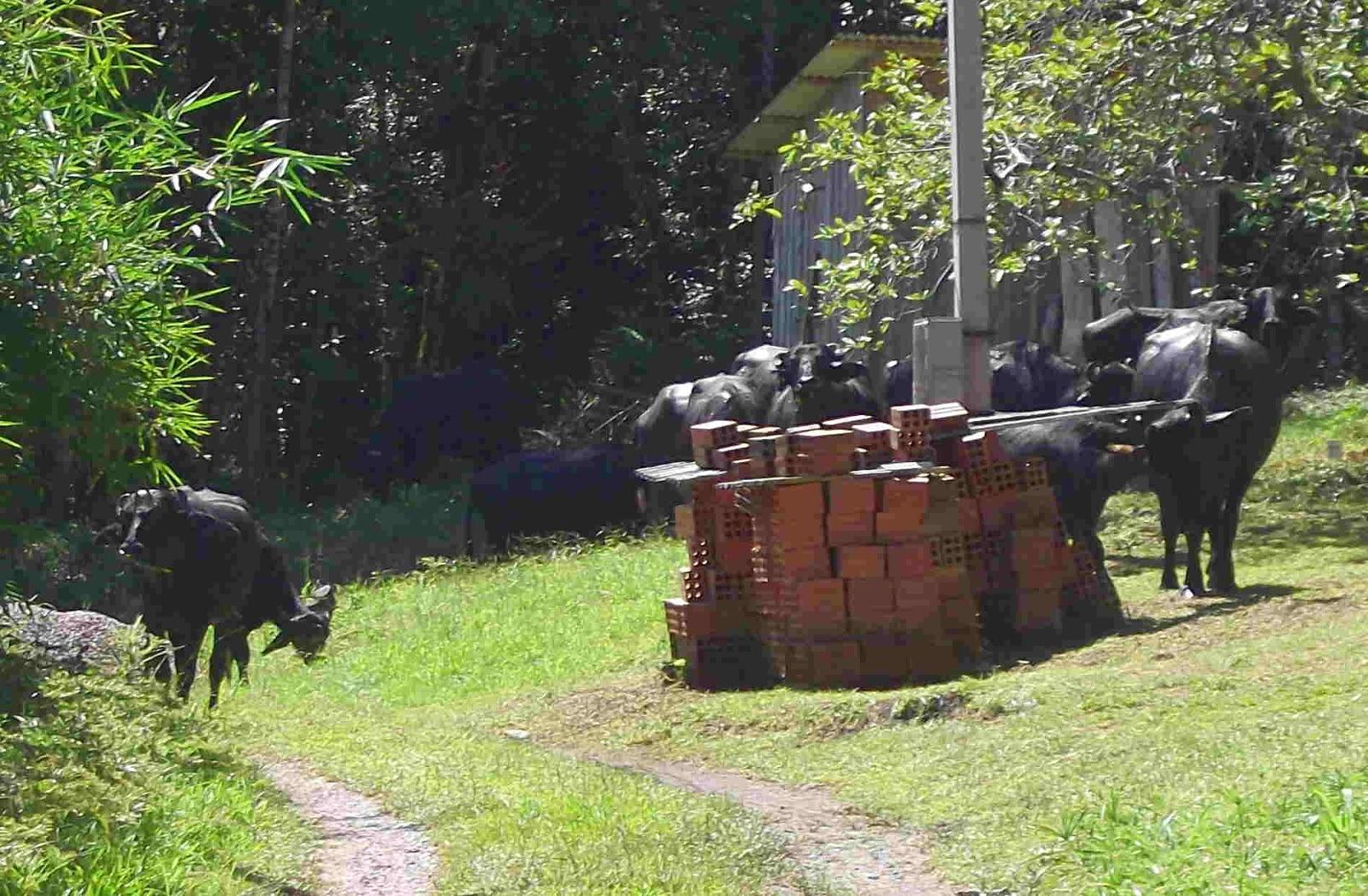 terra verde abenteuer am rande des regenwaldes invasion der b ffel. Black Bedroom Furniture Sets. Home Design Ideas