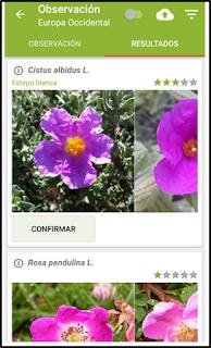 PlantNet, identifica plantas con tu móvil