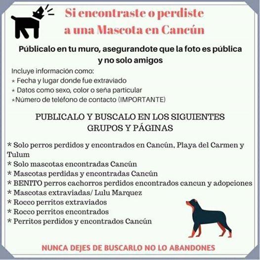 Proyecto Cuida e Identifica a tu mascota