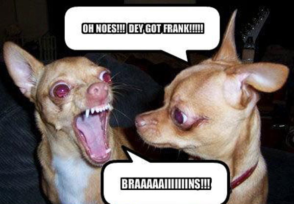 Really Funny Pictures Of DogsFunny Pictures Of Dogs With Sayings