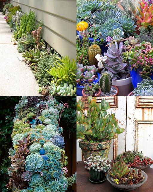 มารู้จัก Succulent Cactus กับ 10 เรื่องน่ารู้ ก่อนการเลี้ยง พืชอวบน้ำ แคคตัส