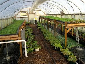 Ini Alasan Greenhouse Lebih Menguntungkan Dibandingkan Lahan Terbuka