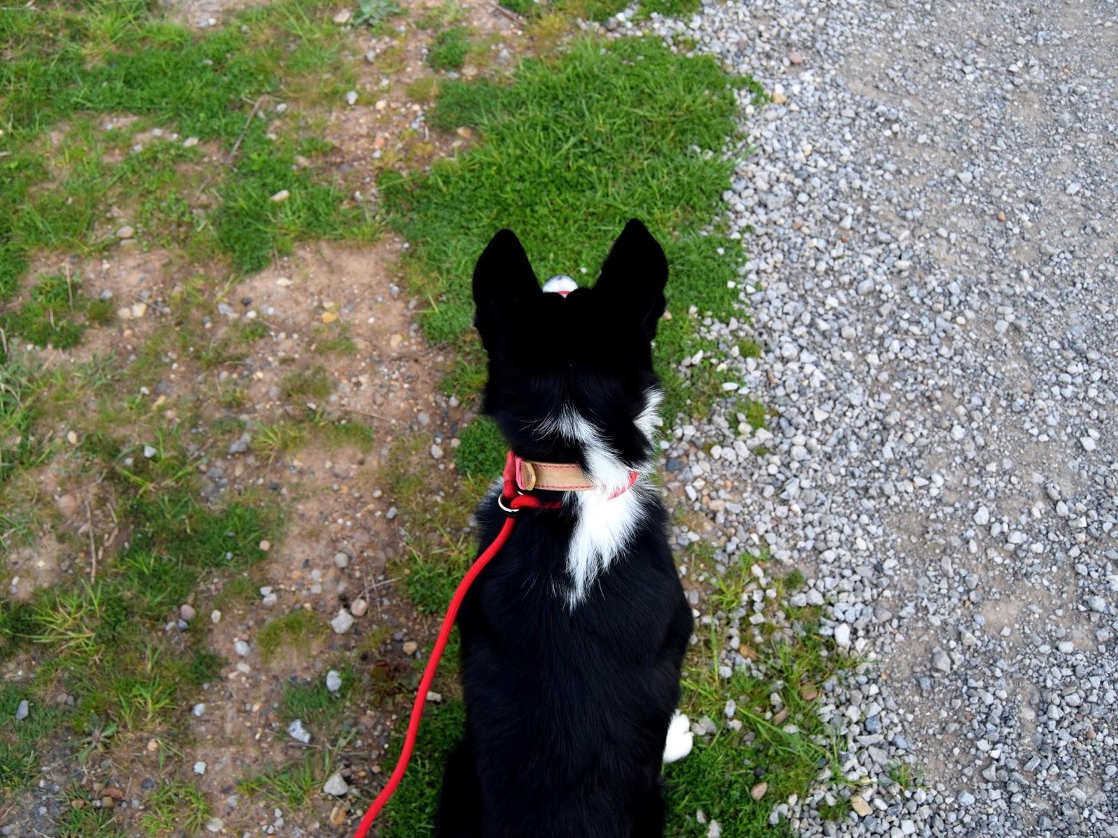 Mollie At Parkrun