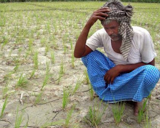Farmer puts pressure on Govt. on GM