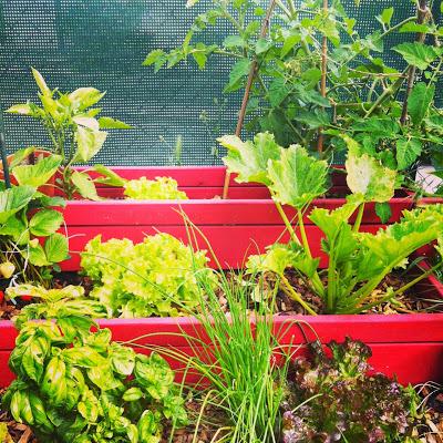 initiales gg jardin r alisez un potager urbain pour votre balcon. Black Bedroom Furniture Sets. Home Design Ideas
