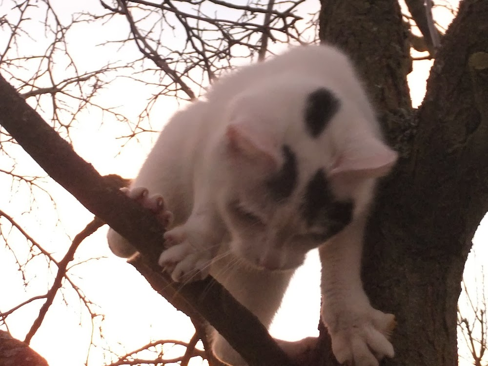 geht die katze rauf oder runter