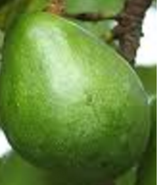 Amazing health benefits of Avocado Butter Fruit Makhanphal - Avocado Help with Kidney stones