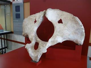 Yacimiento paleontológico de Torralba y Ambrona
