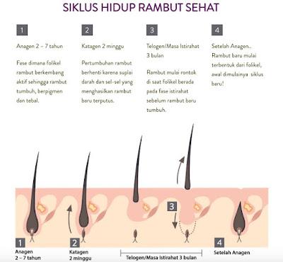Pertumbuhan Rambut dan Nutrisinya