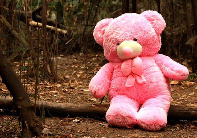 Boneka Teddy Bear Wisuda Online  a7dcdbc318