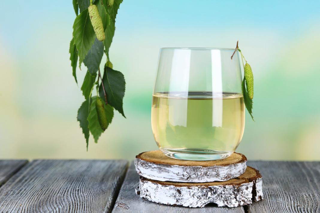 Sezon na sok z brzozy – brzozowe kuracje dla zdrowia i urody