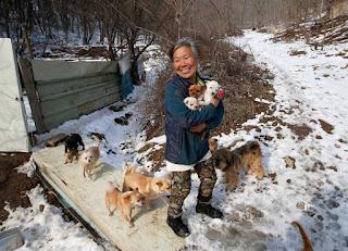 surcoreana cuida a 200 perrros