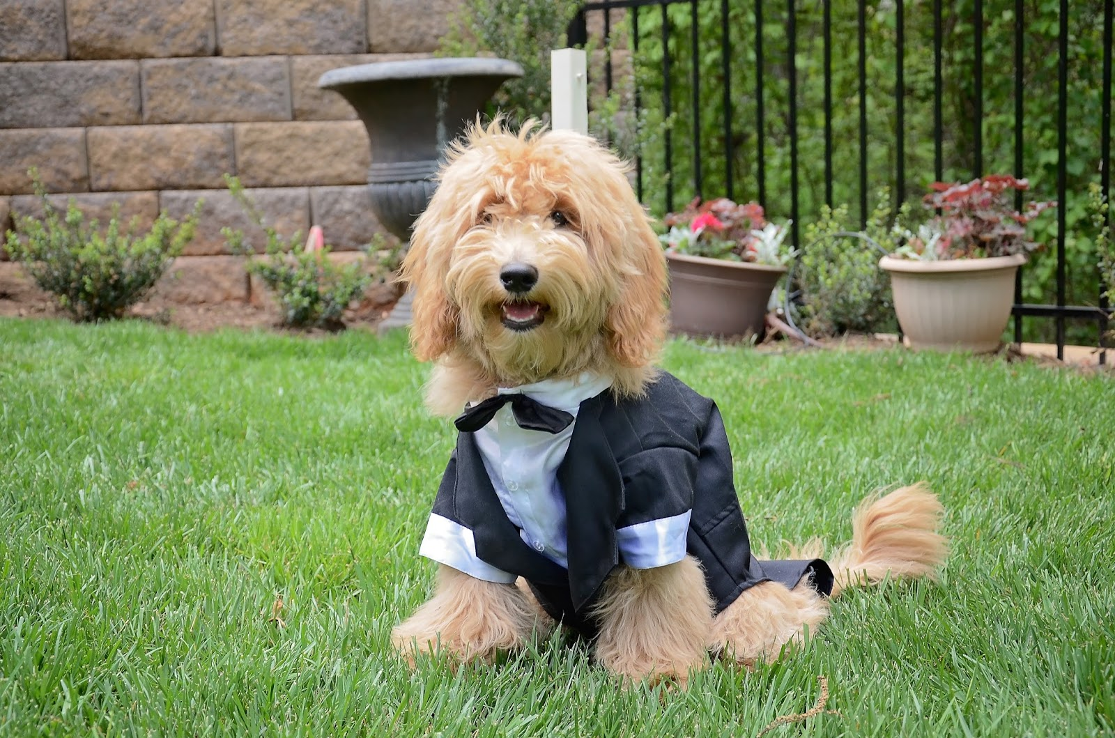 How to Include Your Dog in Your Wedding Ceremony