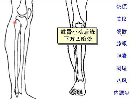 陵後穴位 | 陵後穴痛位置 - 穴道按摩經絡圖解 | Source:zhongyibaike.com