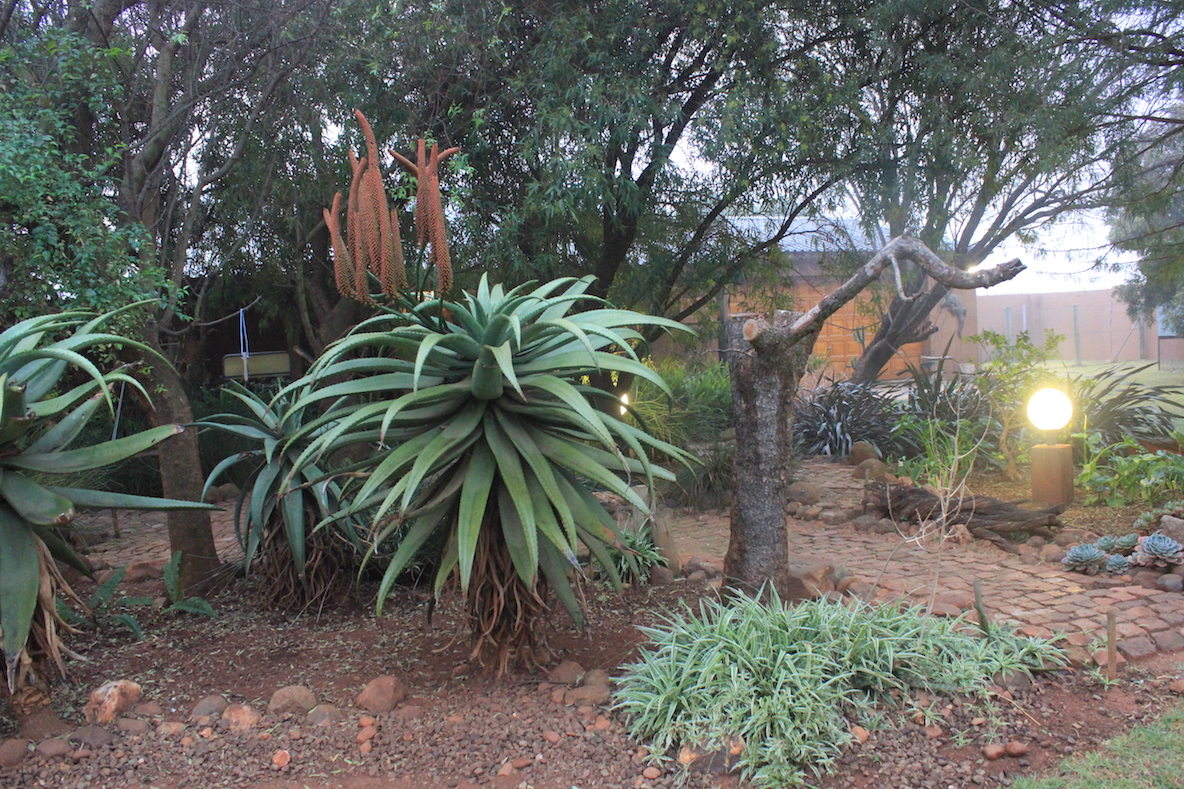 Leis Landscaping Yard : Hedgie s nature journal winter fire and ice