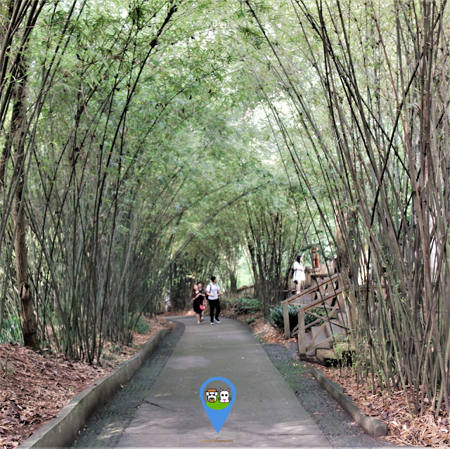 Chengdu Panda Breeding Research Centre is a beautiful manmade natural park for rearing and breeding of pandas in Sichuan province of China