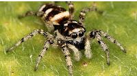7 remèdes pour soigner les piqûres d'araignées